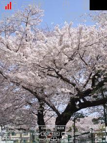 Sakura005_so